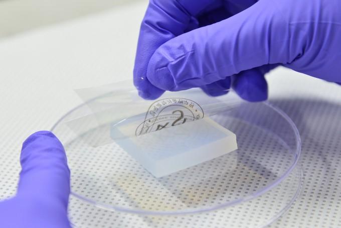 KIST 스핀융합연구단 연구원이 개발한 전사 프린팅 기술로 하이드로젤(하단) 위의 전극을 PET 필름(상단)에 손쉽게 옮기고 있다. 사진제공 KIST