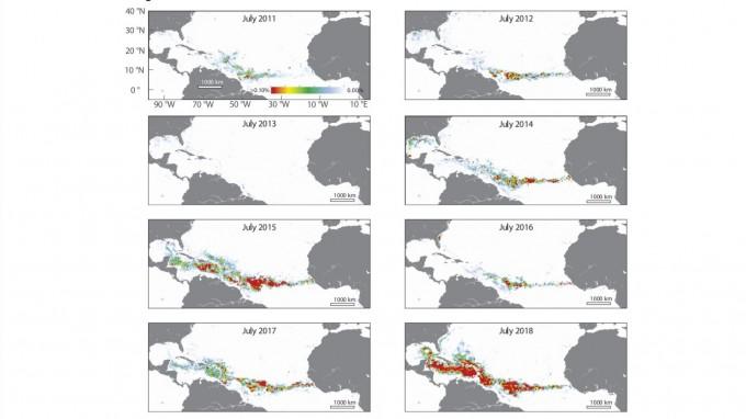 지난해 6월 기후 변화로 인해 해조류의 일종인 모자반 약 2000만t이 대서양과 카리브해를 덮쳤다. 모자반의 양이 처음 급격하게 늘어난 2011년보다 약 10배가 증가한 것으로 조사됐다.사이언스 제공