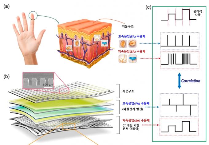 연구팀은 인간의 피부를 그대로 따라한 센서를 개발해 감도를 높임과 동시에 인체에서 감각을 느낄 때 나오는 신호와 비슷한 신호가 센서에서 나오도록 했다. DGIST 제공