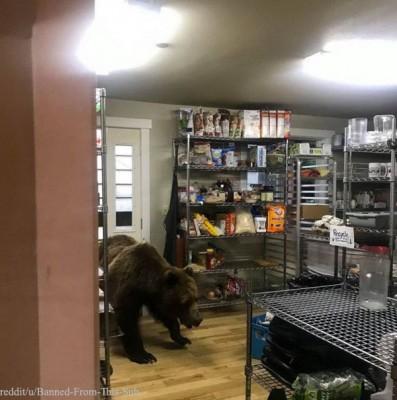 식당으로 침입한 곰