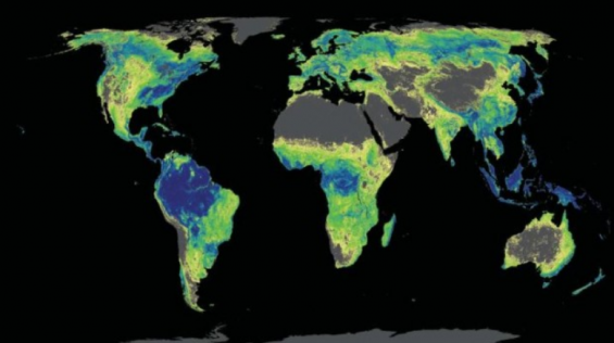 [강석기의 과학카페] 숲을 늘려야 지구온난화 속도 늦춘다