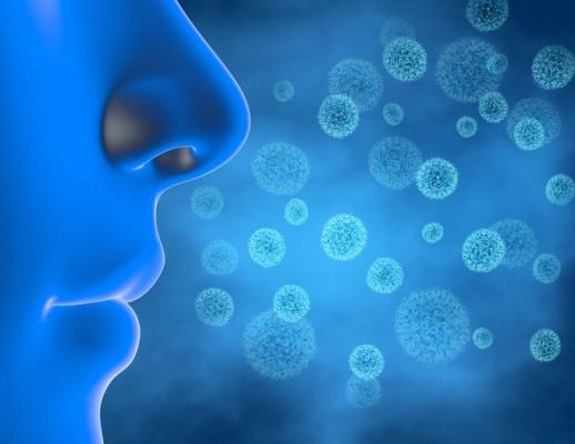 장내미생물처럼 콧속에도 건강지킴이 세균이 산다