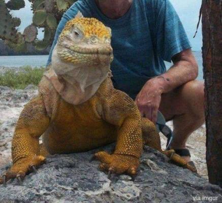 거대한 이구아나