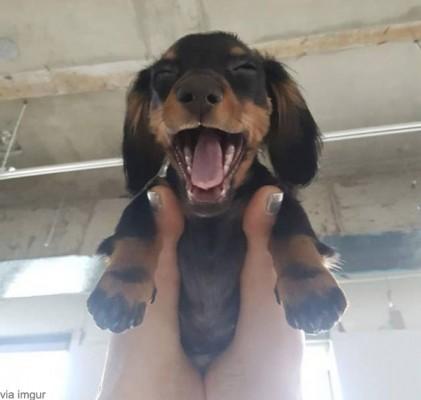 박장대소 하는 강아지