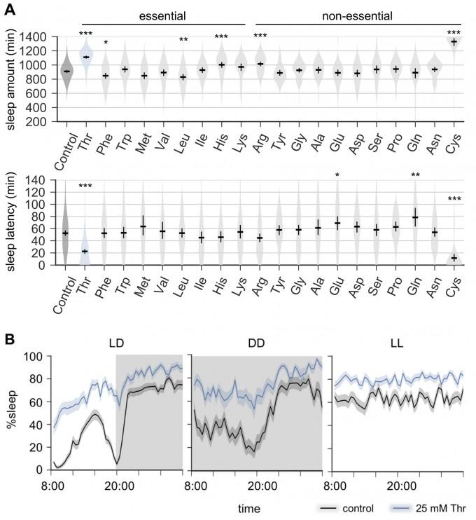 A는 20가지 아미노산을 각각 섭취한 초파리에서 하루 수면시간과 깨어있는 상태에서 잠들 때까지 걸린 시간을 나타내는 그래프다. 트레오닌에 의한 수면촉진 효과가 가장 크다. B는 초파리의 수면 시간을 24시간 기준으로 나타낸 그래프이다. 트레오닌을 섭취한 초파리는 빛의 유무에 상관없이 수면 시간이 증가한다. UNIST 제공