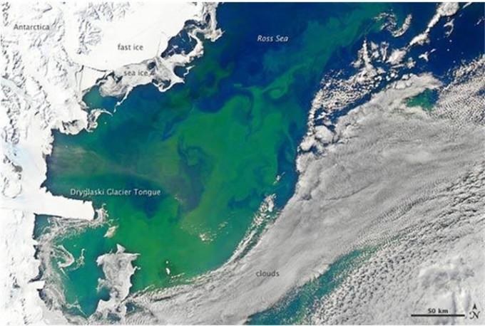남극 봄철 로스해에서 나타나는 미세조류의 모습이다. NASA 제공