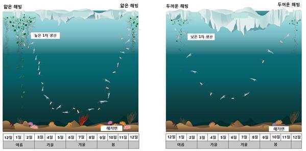 엘니뇨현상과 남극 고기압이 강했던 2010년(왼쪽)과 라니냐현상과 남극 저기압이 강했던 2013년(오른쪽) 동물플랑크톤의 수직이동 변화를 비교했다. 극제연구소 제공