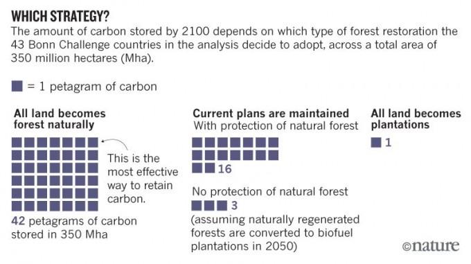 43개국이 참여한 숲 복원 프로젝트인 '본 챌린지'는 2030년까지 3억500만 헥타르 면적의 땅을 숲으로 복원할 계획이다. 만일 전체 면적이 자연숲으로 복원되면 2100년까지 대기 중 탄소 420억 톤을 포집할 수 있지만(왼쪽) 현 계획대로 34%가 자연숲, 45%가 조림, 21%가 농산림이면 탄소 160억 톤을 포집하는 데 그친다(가운데). 만일 전부 조림을 하면 10억 톤에 불과하다(오른쪽). 네이처 제공