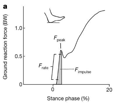 걸음을 내디딜 때 땅이 받는 힘(ground reaction force)을 보행의 단계(stance phase)에 따라 나타낸 그래프다. 발바닥 뒤쪽이 땅에 닿는 순간부터 힘의 가해져 정점에 이른다. 이 힘의 크기가 충격정점진폭(Fpeak)다. 이때 기울기가 하중속도(Frate)이고 이 사이 그래프 아래 면적이 충격량(Fimpulse)이다. 네이처 제공