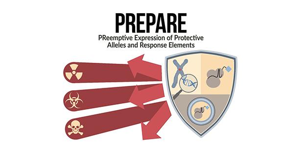 DARPA의 프로젝트 중 하나인 ′대립 형질 보호와 요소 반응을 위한 선제적 발현(PREPARE)′이다. 인플루엔자나 방사선 등의 급성 위협으로부터 국민을 보호하기 위해 체내에서 이를 방어할 유전자를 인위적으로 만들게 한다는 목표를 가진 연구다. DARPA 제공