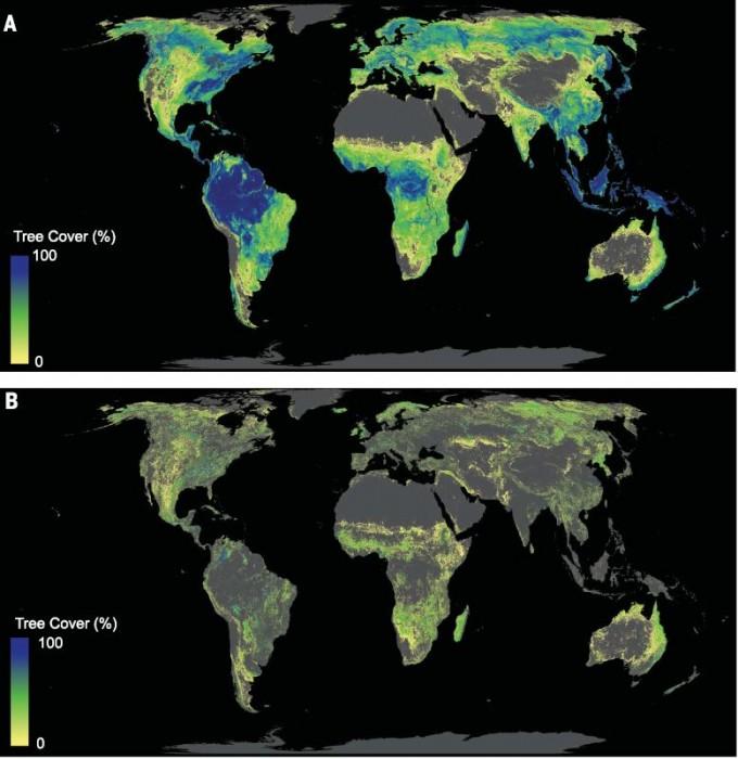 육지의 숲 잠재력을 보여주는 지도다. 나무가 덮을 수 있는 비율에 따라 다른 색으로 표시했다. 적도 주변 아열대, 열대 우림이 잠재력이 큼을 알 수 있다. 한반도도 잠재력이 꽤 된다. B: 숲 복원의 여력을 보여주는 지도다. 동부 시베리아와 북미, 호주 등 곳곳에 숲이 파괴된 땅이 많음을 알 수 있다. ′사이언스′ 제공