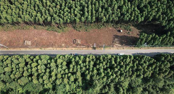 제주 비자림로는 삼나무 숲을 사이에 두고 제주시 구좌읍 평대리에서 봉개동까지 27.3km 구간으로 쭉 뻗은 도로다. 이 도로를 4차선으로 확장하는 공사를 두고 논란이 일고 있다. 연합뉴스