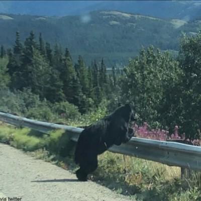 인생 고민에 빠진 곰 '포착'