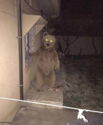 창문 밖에 나타난 곰