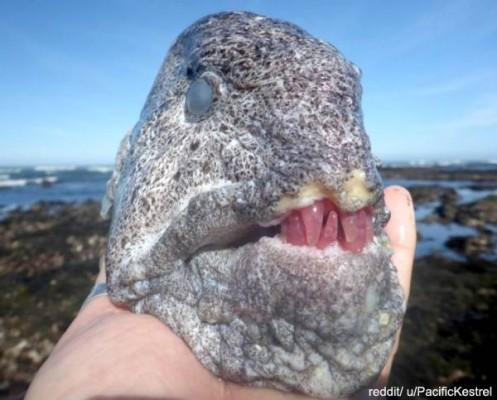 바닷가에서 발견한 괴물 같은 물고기
