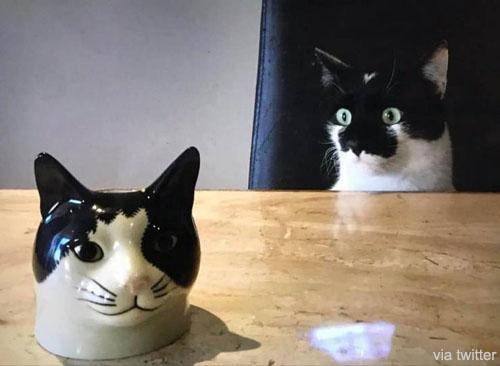 자기 머리를 보고 깜짝 놀란 고양이