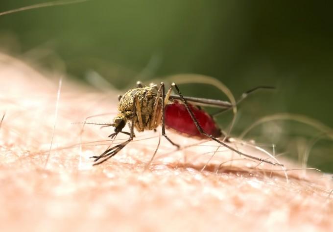 WHO와 모건스탠리 전문가들은 기후변화로 인해 급증할 전염병으로 지카바이러스와 뎅기열, 황열 등 모기매개전염병을 꼽았다. 게티이미지뱅크 제공