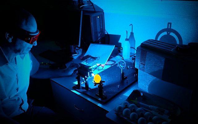 유전자편집(크리스퍼) 기술로 Z염색체에 노란색형광단백질 유전자를 넣어준 암탉(Z*W)과 일반 수탉(ZZ) 사이에서 얻은 달걀에 빛을 쪼여주면 오직 수컷 달걀(ZZ*)만 노란색 형광을 내기 때문에 쉽게 감별할 수 있다.  eggXYt 유튜브 캡처