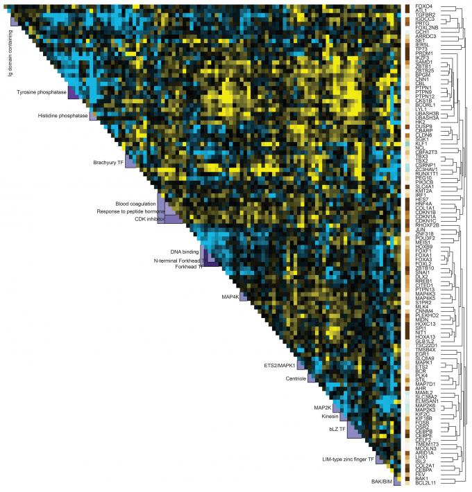 미국 샌프란시스코 캘리포니아대 연구팀이 최초로 만든 '유전자 상호작용 지도'의 일부. 각 유전자들이 얼마나 강력하게 상호작용하는지 세기와, 상호작용했을 때 서로 유전자 발현에 어떤 영향을 미치는지 나타냈다. 색깔이 노랄수록 발현하는 데 서로 도움을 주고, 푸를수록 서로 억제한다는 뜻이다. 사이언스 제공.