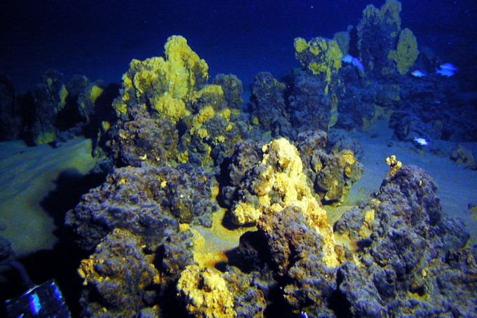 심해의 열수분출공 주변은 미생물이 살아갈 수 있는 열과 영양분을 공급한다. 최근 일본 연구자들이 수심 2533미터 해저에서 채취한 토양 시료에 존재하는 아스가드 고세균을 실험실에서 배양하는 데 성공해 화제가 되고 있다. ′네이처′ 제공