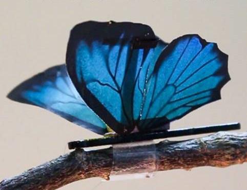 나비처럼 우아한 날갯짓 가능한 인공근육 탄생