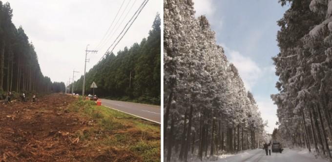 도로 확장을 위해  삼나무가 베어진 모습(왼쪽), 겨울철 비자림로의 모습. 동아일보DB