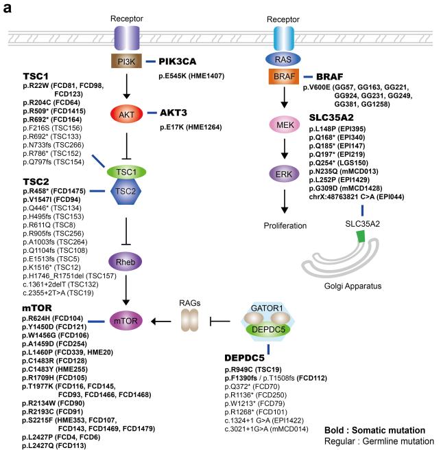 이번 연구에서 발견한 체세포성 돌연변이이다. 총 232명의 환자에서 시행된 유전체 분석결과 8개의 유전자에서만 돌연변이가 빈발함을 확인했다. KAIST 제공