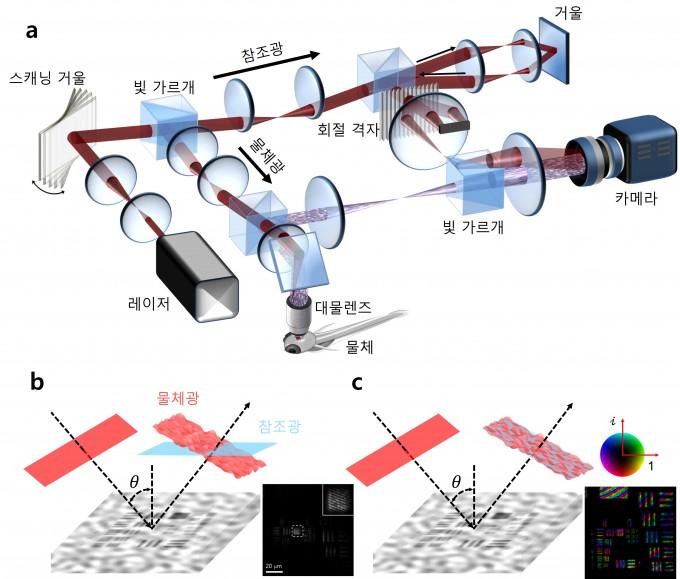 시분해 초고속 홀로그램 현미경(a)은 스캐닝 거울을 이용해 물체를 조명하는 빛과 참조광을 동시에 바꿔가며 되돌아 나온 간섭무늬를 기록한다. 참조광을 고정시킨 채 물체광만 스캐닝하는 기존 기술(b)이 제한된 영역에서만 관찰이 가능했던 것과 달리, 개발된 기술(C)은 모든 면적에서 간섭무늬를 기록할 수 있다. IBS 제공