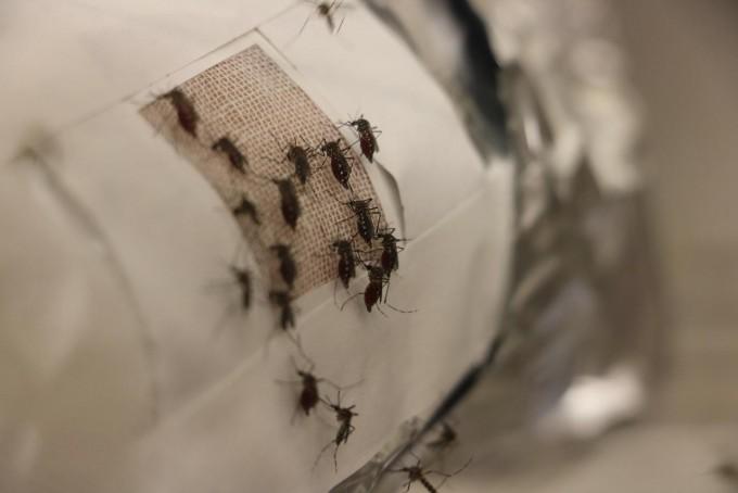 로버트 허트 미국 브라운대 화학과 교수 연구팀은 그래핀이 모기를 완벽히 막아낼 수 있다는 연구결과를 발표했다. 브라운대 제공