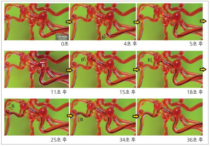 연구팀이 개발한 연성 연속체 마이크로로봇이 실리콘으로 만든 모사 뇌 혈관을 지나는 실험 모습. 사이언스 로보틱스 제공