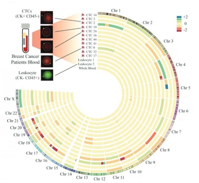 유방암 환자에 적용된 단일 순환종양세포 분리 분석 기술. 서울대 공대 제공