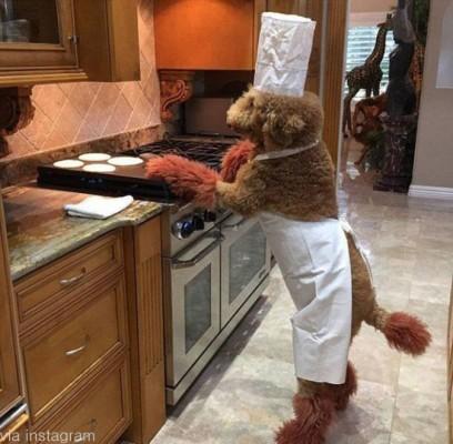 우리집 반려견은 요리사