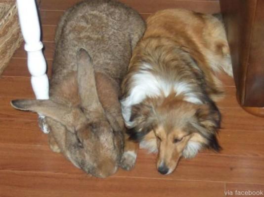 거대한 토끼 '화제'