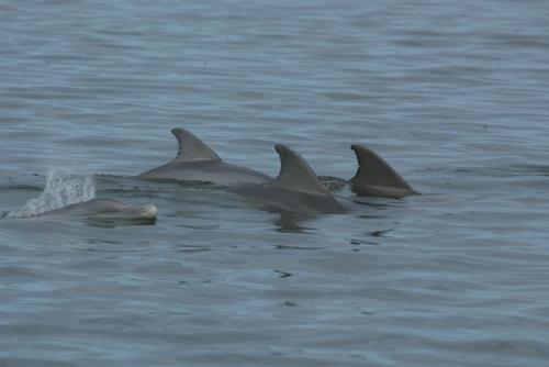 인간 항생제 남용으로 애꿎은 돌고래도 피해