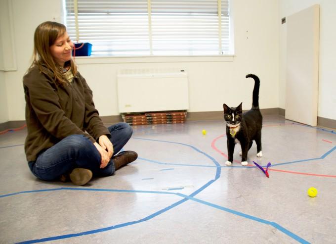 고양이는 주인과 유대감을 잘 형성하지 않는다는 통념과 달리 인간 아기나 개와 비슷하게 보호자와 유대감을 형성한다는 연구결과가 나왔다. 안정 애착을 형성한 고양이는 주인을 안전기지 삼아 활달하게 주변 환경을 탐험하는 모습을 보인다. 오리건주립대 제공