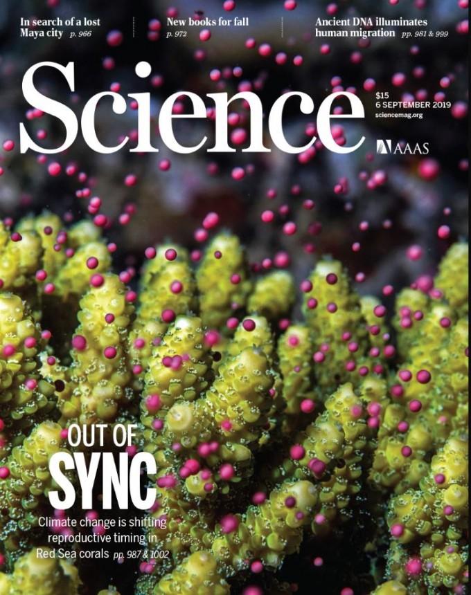 지구온난화가 산호의 번식 과정에 영향을 미쳐 멸종으로까지 이끌 수 있다는 연구결과가 나왔다. 사이언스 제공
