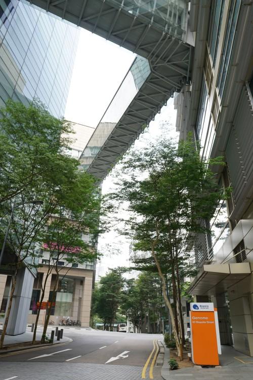8월 26일 찾은 싱가포르 바이오폴리스의 외부 전경. 바이오폴리스 내의 7개 건물이 모두 사진 속 건물들처럼 다리로 연결돼 있다. 신수빈 기자