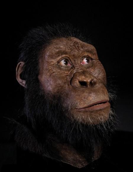 8월 말 ′네이처′에는 오스트랄로피테쿠스 아나멘시스의 얼굴을 복원한 연구 결과가 발표됐다. 380만 년 전에 살았던 최초의 오스트랄로피테쿠스로 입이 튀어나오고 머리가 작았던 것으로 밝혀졌다. 클리브랜드자연사박물관 제공