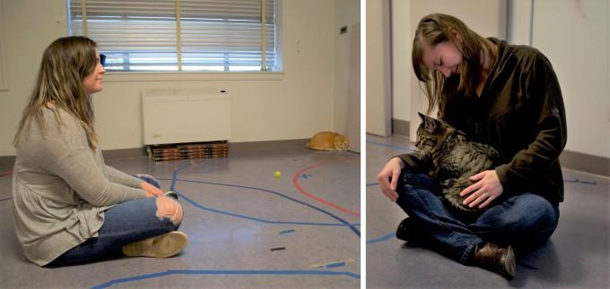 주인과 불안정 애착을 형성한 고양이는 주인으로부터 멀리 떨어져 웅크리는 회피형 애착(왼쪽)이나 주인의 무릎에 뛰어올라 매달리는 양가형 애착을 보이는 것으로 나타났다. 오리건주립대 제공
