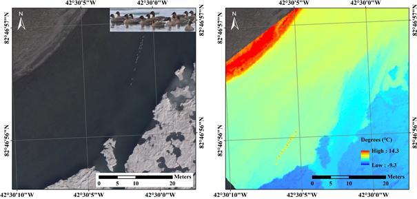 북그린란드 해안가에서 드론으로 촬영한 가시광선 영상(왼쪽)과 적외선 영상이다. 두 영상 모두 분홍발기러기 16마리를 식별할 수 있다(빨간 표시). 극지연구소 제공