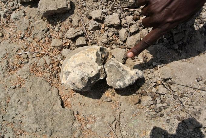 에티오피아에서 발굴된 거의 완벽한 아나멘시스 두개골 화석 현장 사진이다. 이렇게 완벽한 두개골이 발굴되는 일은 매우 드물다. 클리브랜드자연사박물관 제공