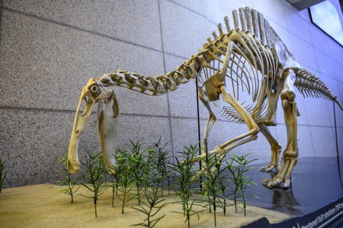 이번 복원 결과를 바탕으로 대전 유성구 지질박물관에 4분의 1 크기의 데이노케이루스 골격을 제작했다. 한국지질자원연구원 제공