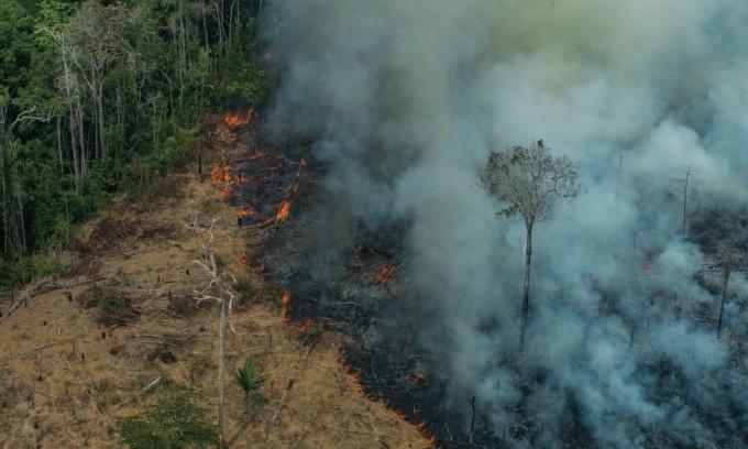 브라질국립우주연구소의 통계에 따르면 올해 1월부터 9월까지 브라질에서만 무려 14만 건이 넘는 산불이 일어났다.  주로 건기인 7월부터 9월에 집중되어 나타났는데, 8월과 9월에만 각각 5만 건 정도의 산불이 발생했다. 하루에도 수천 건의 산불이 아마존을 불태우고 있다는 말이다. Victor Moriyama/그린피스