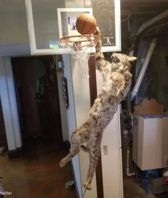 고양이의 덩크 슛