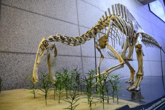 미스터리 공룡 '데이노케이루스' 골격 50년만에 과학적 복원 성공