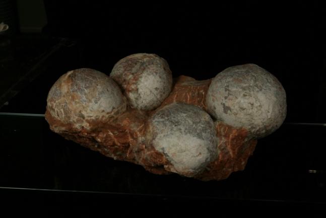 중생대에 살았던 초식공룡의 알 화석. 국립과천과학관 제공