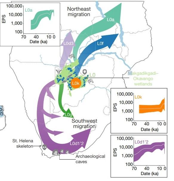 L0의 다양한 세부 유전형 인구집단의 이주를 보여주는 지도다. 초록색과 파란색으로 묘사된 북동쪽 인구 확산이 13만 년 전, 보라색 인구 확산이 11만 년 전 이후 일어난 두 번의 주요 확산 현상이다. 주황색 지점이 최초의 발상지이고, 이 지역에는 여전히 칼라하리 코이산 족이 살고 있다. 네이처 제공