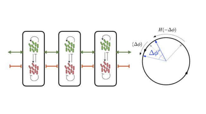 박테리아들의 복잡한 상호작용(좌)을 수학을 이용해서 원위의 점들의 상호작용으로 단순화 (우)하여 양성 피드백룹이 전체 공간 동기화를 이루어내는 원리를 발견했다. KAIST 제공