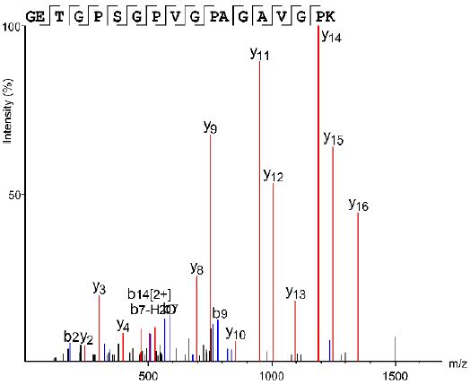 16만 년 전 티벳 고원에 살았던 인류의 화석이 데니소바인임을 증명한 질량분석 데이터다. 이를 통해 콜라겐 1알파2 단백질의 979~996번째 아미노산 서열을 해독한 결과 996번째 아미노산이 라이신(K)으로 밝혀졌다. 네안데르탈인과 현생인류는 996번째 아미노산이 아르기닌(R)이다. 네이처 제공