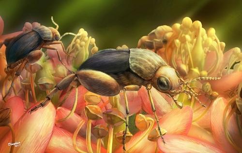 호박(琥珀) 속 곤충서 9천900만년 전 꽃가루 매개 확인